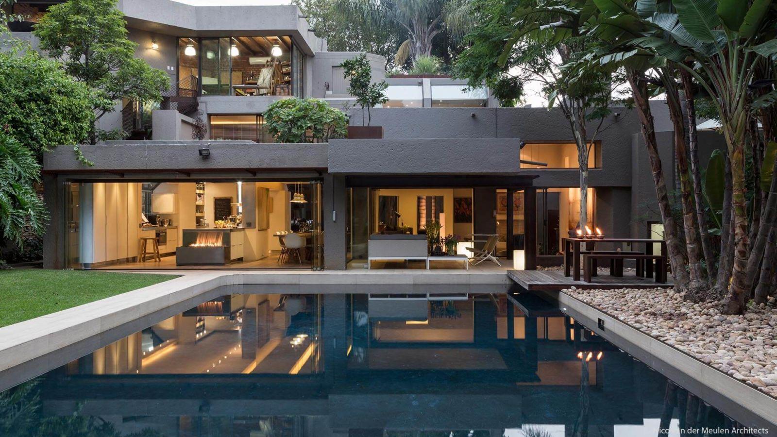 House Fern